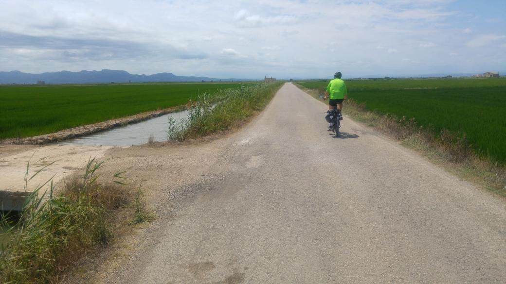 Foto 4 campos de arrozales.jpg
